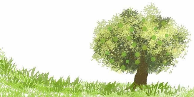 カボスの木
