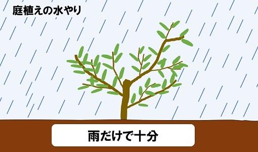 庭植えの水やり