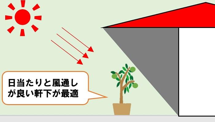 鉢植え置き場所