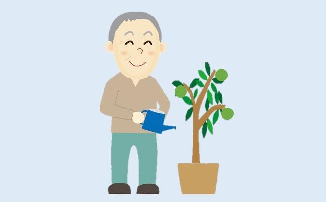 カボスの鉢植え