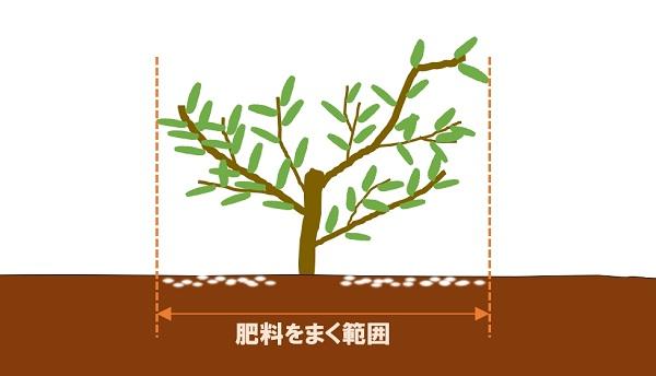 肥料をまく範囲