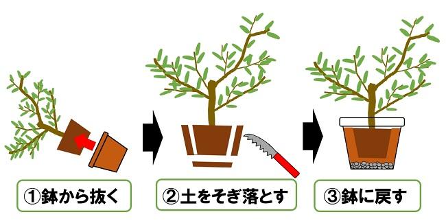鉢の植え替え
