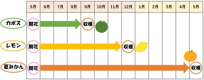 開花から収穫までの期間比較