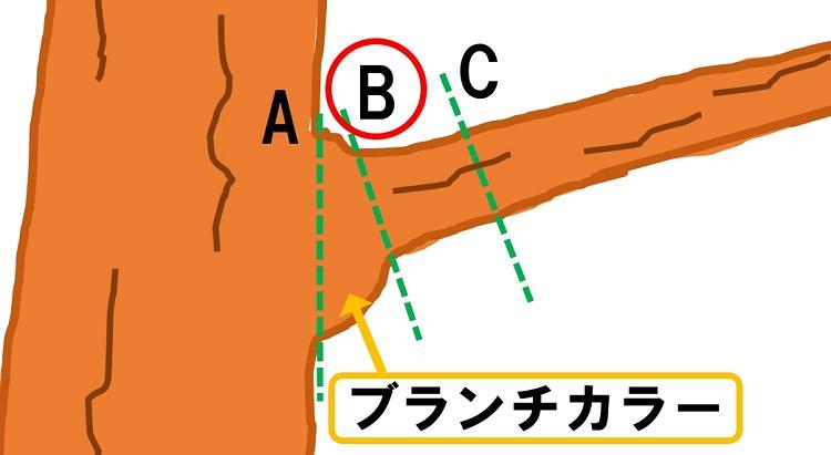 ブランチカラーを残した正しい切り位置