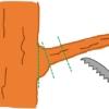 主枝の剪定位置とブランチカラー